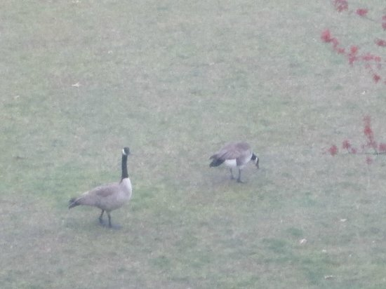 Hotel Rose - A Staypineapple Hotel: View from my room of the cutest pair of geese by the river!