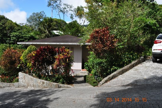 La Montana y el Valle Coffee Estate Inn: Bungalow is nestled on 4 sides with all manner of flora