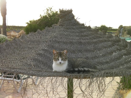 ClubHotel Riu Tikida Dunas : One of the locals cat