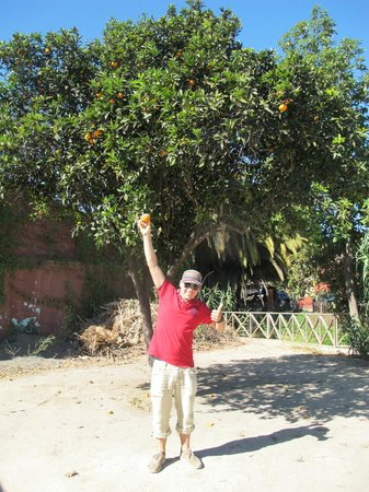 Colchagua Museum : An orange tree right by the museum