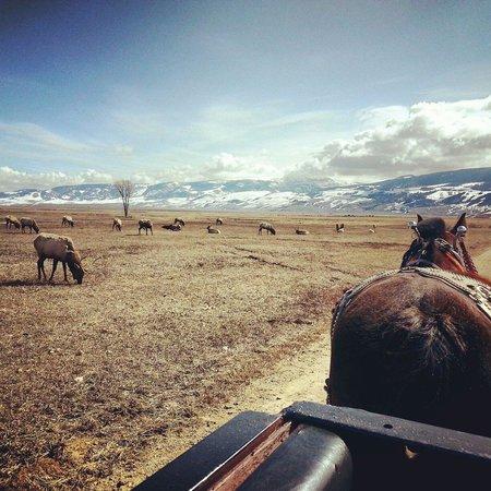 National Elk Refuge: Wagon ride