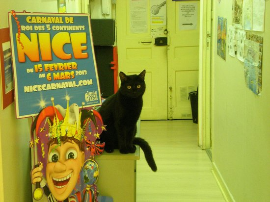 Open House Nice : Vicky the Cat
