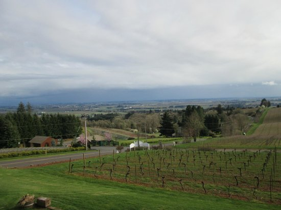 Wine Country Farm : Gorgeous wine country view!