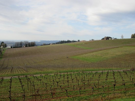 Wine Country Farm : View of the Willamette Valley from my room.