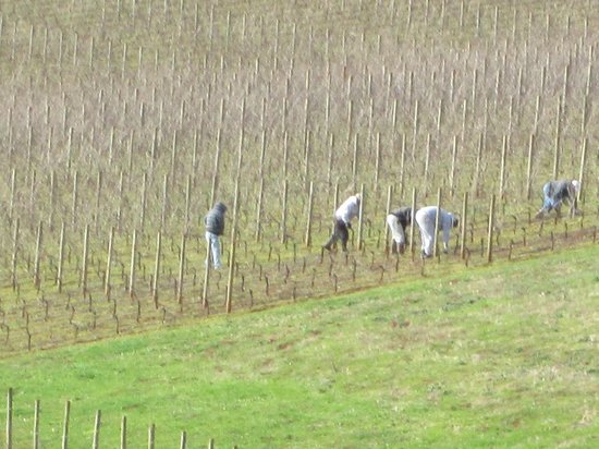 Wine Country Farm: From the balcony of my room-the back-breaking labor that goes into the delicious wines we enjoy.