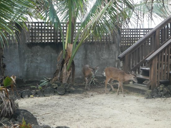 Lands End - Ocean Front Lodge: Many friendly hotel deer! Watch where you step...