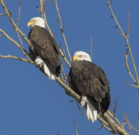 Planet Earth Adventures: Two eagles that we saw along the road.