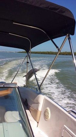 Sea Shell Boat Tours: dolphin!