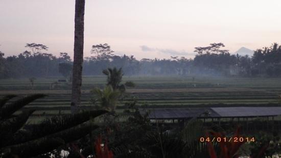 Villa Agung Khalia: sunrise over the rice paddy