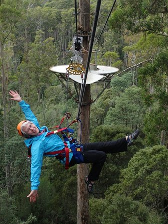 Hollybank Treetops Adventure: Fabulous Fun!