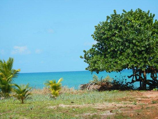 Tipple Tree Beya: View of Ocean from Hopkins Village