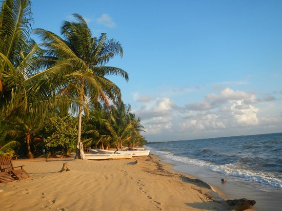 Tipple Tree Beya: Beach next to Tipple Tree and Cocoplum