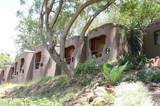 Mara Serena Safari Lodge : What the resident critters see