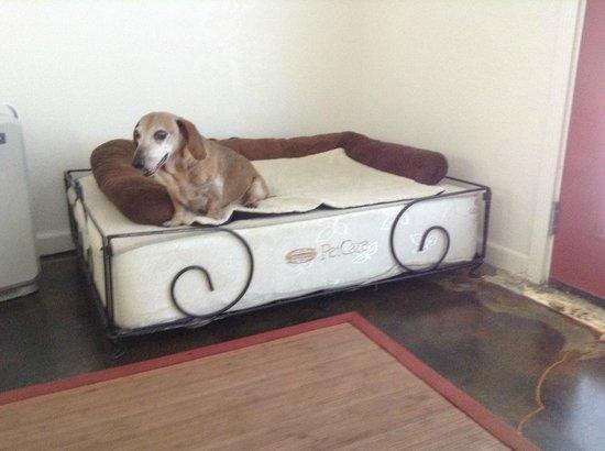 Desert Hot Springs Inn : Dog Bed