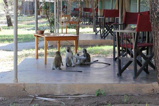 Tarangire Safari Lodge : Welcoming committee