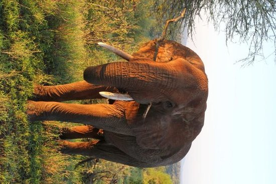 Tarangire Safari Lodge : Fantastic wildlife