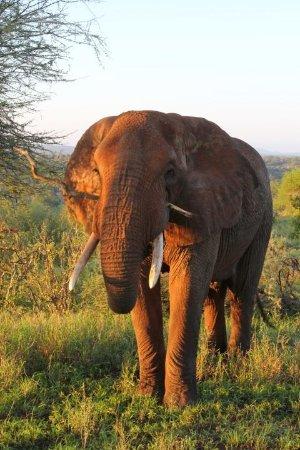 Tarangire Safari Lodge: Fantastic wildlife