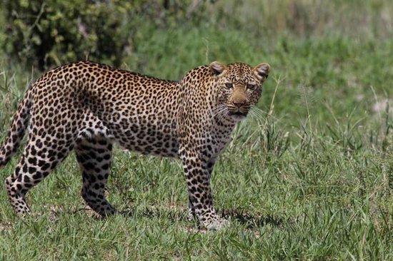 Tarangire Safari Lodge : Even better wildlife