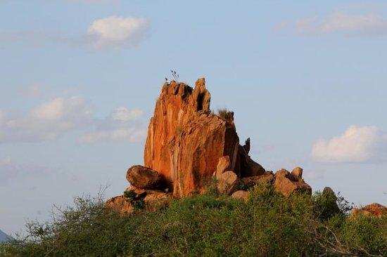 Kilaguni Serena Safari Lodge : Park offers more than just wildlife