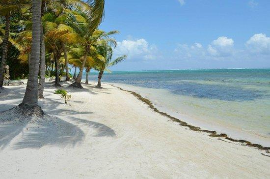 Belizean Shores Resort: Beach View