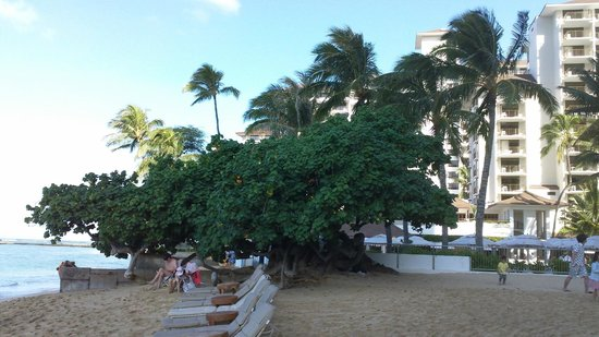 Embassy Suites by Hilton Waikiki Beach Walk : Public Beach on the East side of Hotel (Diamondhead) 5 min walk