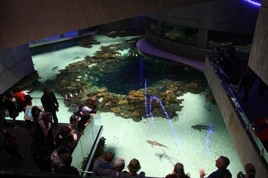 National Aquarium : Barrierr reef tank from the upper level
