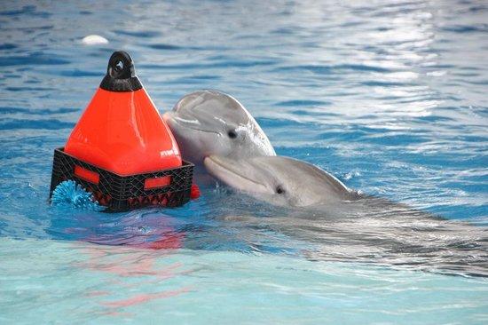 National Aquarium, Baltimore : Dolphin exhibit