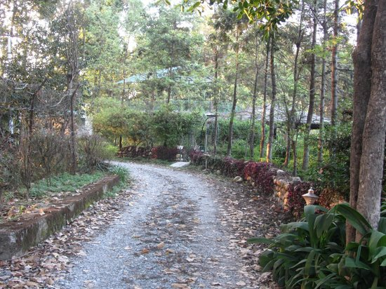 Vishranti - A Doon Valley Jungle Retreat: Forest road
