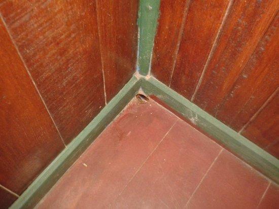 Camarona Caribbean Lodge : Cucarachas en la Habitación