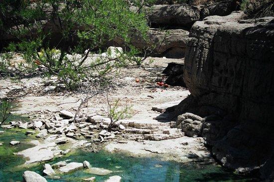 Walkway Picture Of Living Desert Zoo And Gardens State Park Carlsbad Tripadvisor