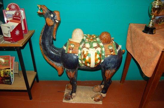 Jims Place: Camel farm