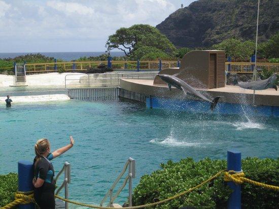 Sea Life Park Hawaii : Dolphin cove show
