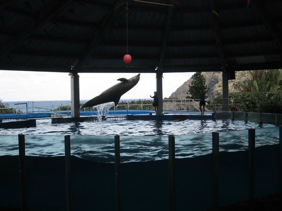 Sea Life Park Hawaii : Dolphins in the Hawaii theatre