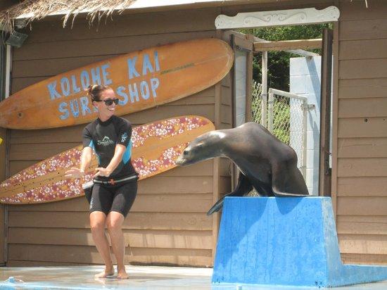 Sea Life Park Hawaii : Sea lion show