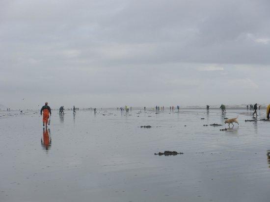 Hi-Tide Ocean Beach Resort: clam diggers