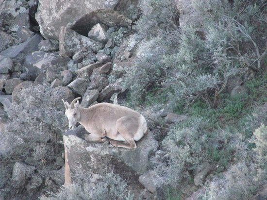 Rio Grande Gorge Bridge: ram