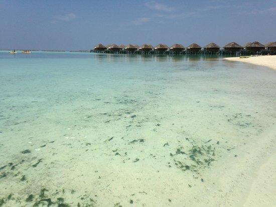 Vakarufalhi Island Resort: spiaggia con brutti over water e alghe