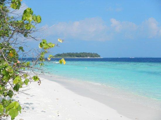 Bandos Maldives : kuda bandos