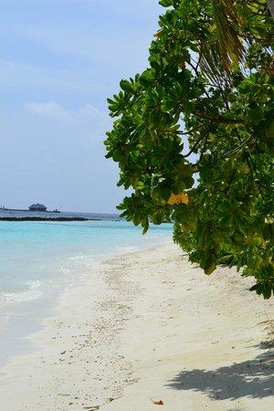 Vakarufalhi Island Resort: plage
