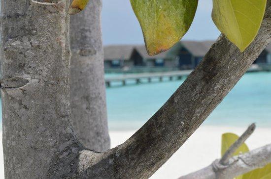 Cocoa Island by COMO: Room View