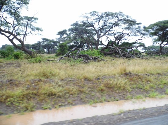 AA Lodge Amboseli : unterwegs