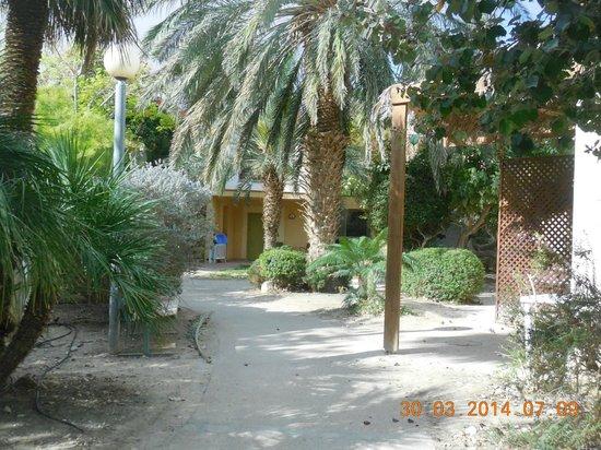 Kibbutz Ein Gedi : Botanischer Garten / Bungalows