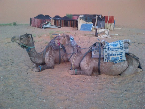 Kasbah Erg Chebbi : Our Camel to desert