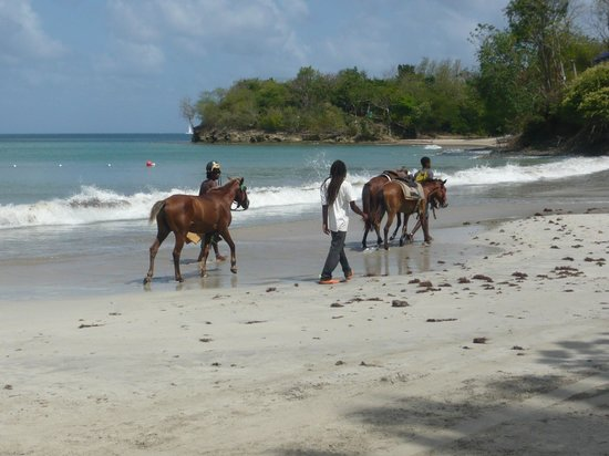 St. James's Club Morgan Bay: Horse riding on the beach