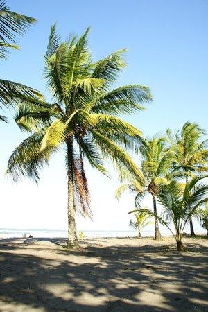Turtle Beach Lodge: Beach