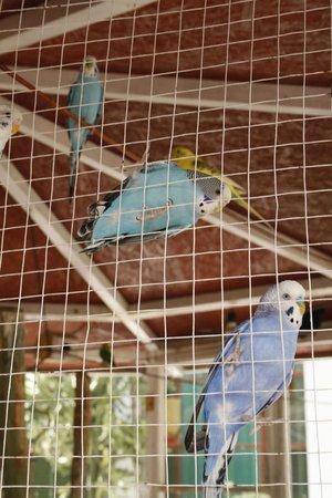 Los Cocos Inn: Pájaros