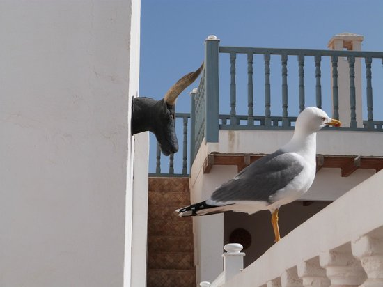 Riad Baladin: A seagull listening to my scolding him