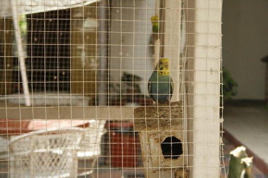 Los Cocos Inn: Pájaro