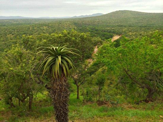 Leopard Mountain Safari Lodge: Ausblick von der Lodge