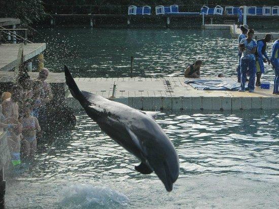 Dolphin Cove: natura natura!!!!